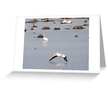 Pelican flying down river Greeting Card