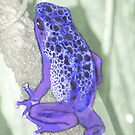 Poison Dart Frog by Lisa G. Putman