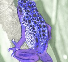 Poison Dart Frog by Lisa G. Putman