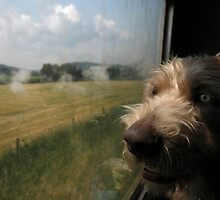 Bruno's first steam train ride  by SWEEPER