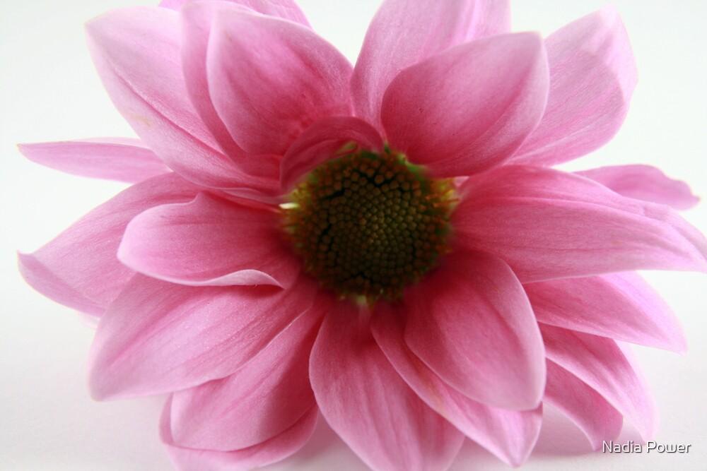 Flower by Nadia Power