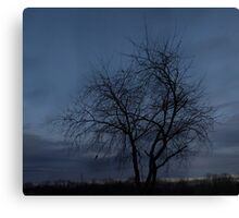 HDR Composite - Twilight Tree Silhoutte Canvas Print