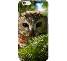 Northern Saw Whet Owl - Amherst Island, Ontario, Canada iPhone Case/Skin