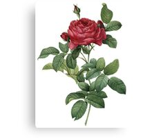 Victorian Scrapbook: Vintage Rose Canvas Print