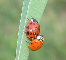 Lady Bug Whoopie by bluebubble927