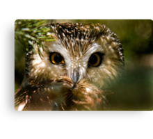 Northern Saw Whet Owl Canvas Print