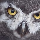 Owls Watching You by MichelleRees