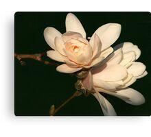 Magnolia Blush Canvas Print