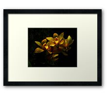 Yellow Orchid Bunch Framed Print