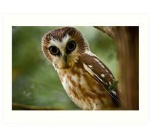 Northern Saw Whet Owl On Branch Art Print
