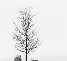 Lone Tree In Cemetery by BrookeRyanPhoto