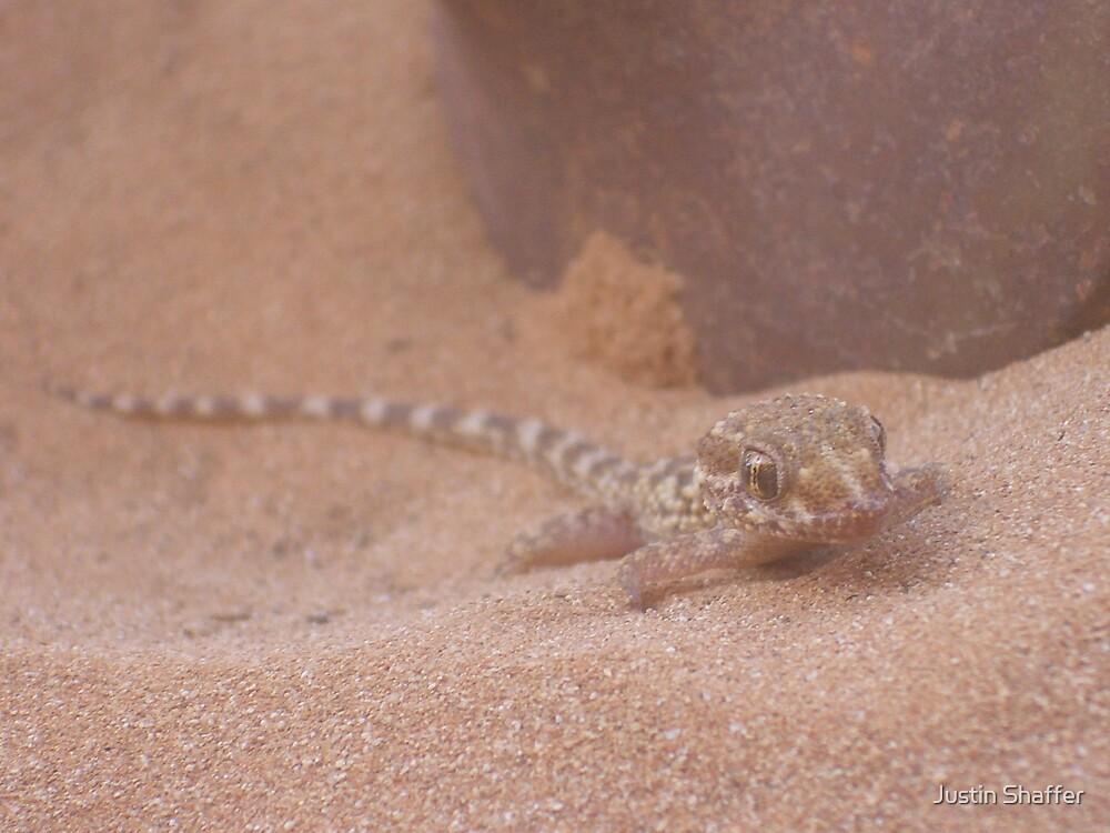 Sand Gecko by Justin Shaffer