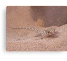 Sand Gecko Canvas Print