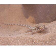 Sand Gecko Photographic Print