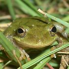 Smiley Frog by Justin Shaffer