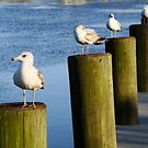 Seagulls by Jessie Harris