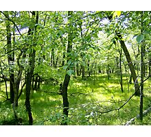 Rare Oak Savana, Ontario Photographic Print