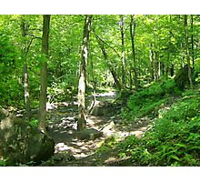Bruce Trail, Ontario Photographic Print
