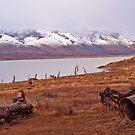 Lago Argentino by Elaine Stevenson
