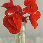 Poppies in glass vase by DonatellaLoi