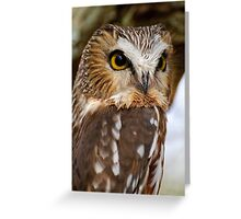 Saw Whet Owl - Amherst Island, Ontario Greeting Card