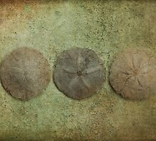 Sand Dollars Green by Barbara Ingersoll