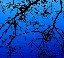 Black and Blu 1 by Lynda Kerr