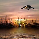 Sunset Flight by TRussotto
