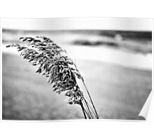 Sea Oats Black and White Poster