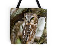Northern Saw Whet Owl - Amherst  Island, Ontario Tote Bag