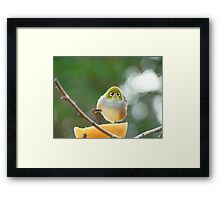 Isn't Possession  9/10ths Of The Law? - Silver-Eye - NZ Framed Print