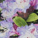 &#x27;Rhododendron&#x27; by Heidi Schwandt Garner