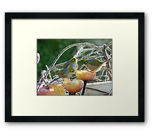 I Have To Say... I Do Prefer Soft Serve - Silver-Eye - NZ Framed Print
