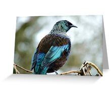 Iv'e A Lace Collar & No Pink Tights!!! - Tui - NZ  Greeting Card
