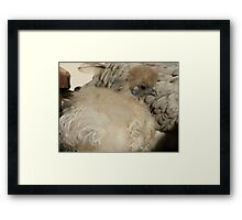 I'm Silk In A Sea Of Feathers!!! - Silky Hen - NZ Framed Print