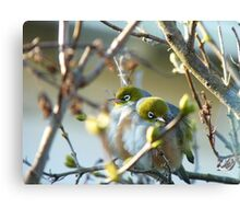 Love Is... Snuggling Up On A Cold Winters Day.. - Silver-Eyes - NZ Canvas Print