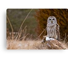Barred Owl on log Canvas Print