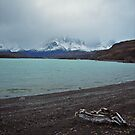 Lago Grey, Torres Del Paine by Elaine Stevenson