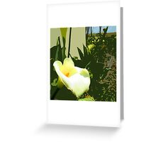 Poster Arum Lily Greeting Card