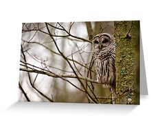 Barred Owl - Presqu'ile Park Greeting Card