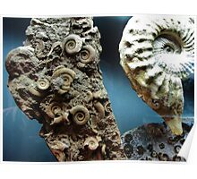 Fossilized Seashells Poster