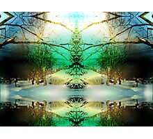 pinetree Photographic Print