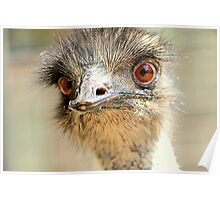 Yes... It Is I  Emu Poster