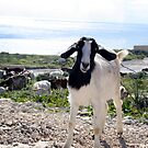The goat by Christian  Zammit