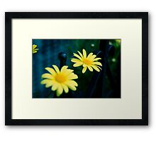 Daisies in Beacon Hill Framed Print