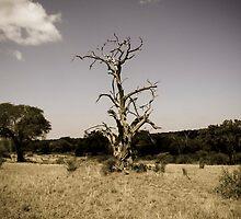 Lightning Tree by Rowan Kanagarajah