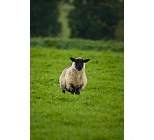 Who Ewe? Photographic Print