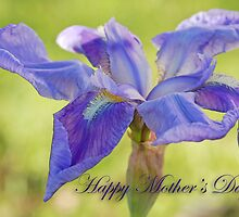 Bearded Iris for Mother's Day by Bonnie T.  Barry