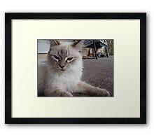 Tough Cat Framed Print