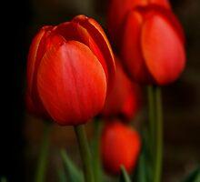 Gentle Beauty by Jonicool